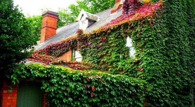 Дом покрытый виноградом сорта девичий