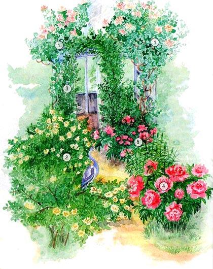 Миксбордер с розами