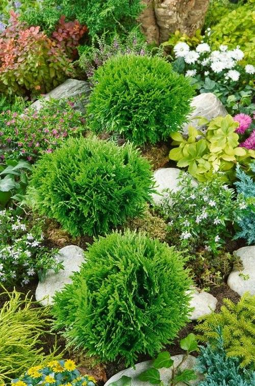 Идеальное сочетание сорта с другими видами растений