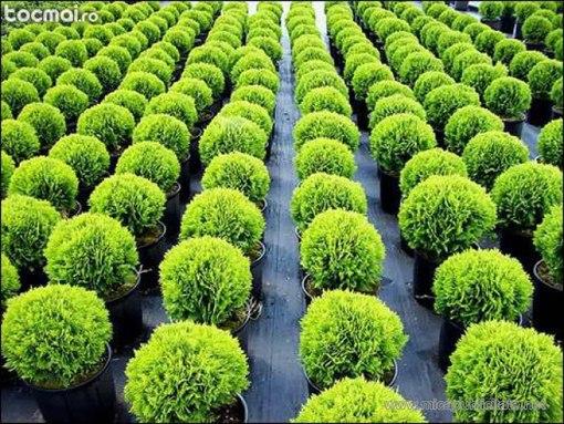 Выращивание в промышленных масштабах